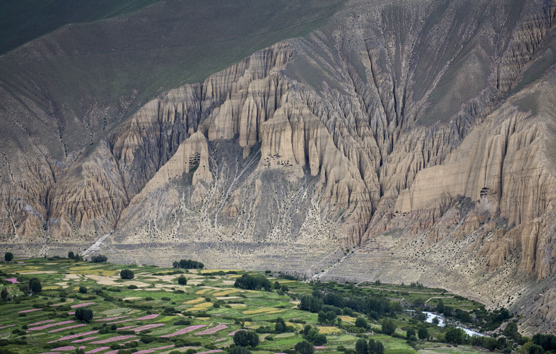 Ghami, Mustang
